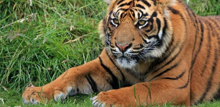 Relationships - From The Male Perspective  International Tiger Day