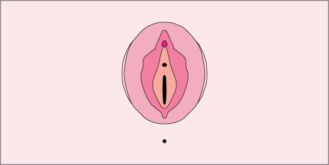 Blog Fact-checked by Doctor Masturbation Sexual Health  The Anatomy of the Hooha (And How It Corresponds to Your Pleasure)